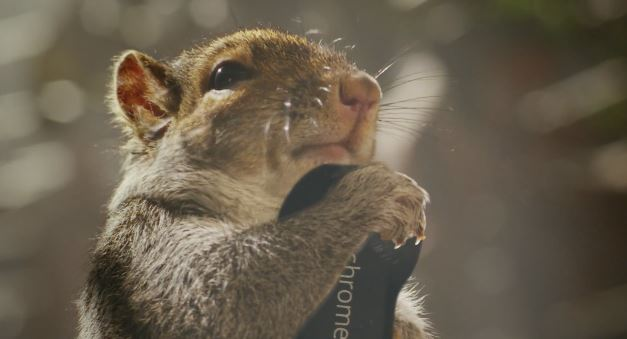 Chromecast is for Everyone – even Squirrels